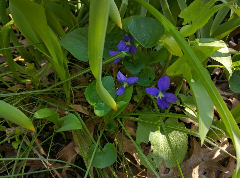 [violets]